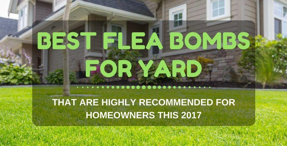 Best Flea Bombs for Yard