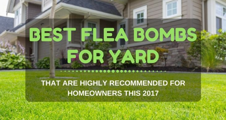 Best Flea Bombs For Yard That Are Highly Recommended For Homeowners
