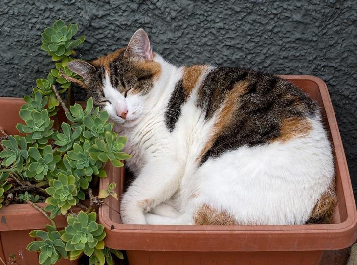 Cats like to take a nap inside the garden pots