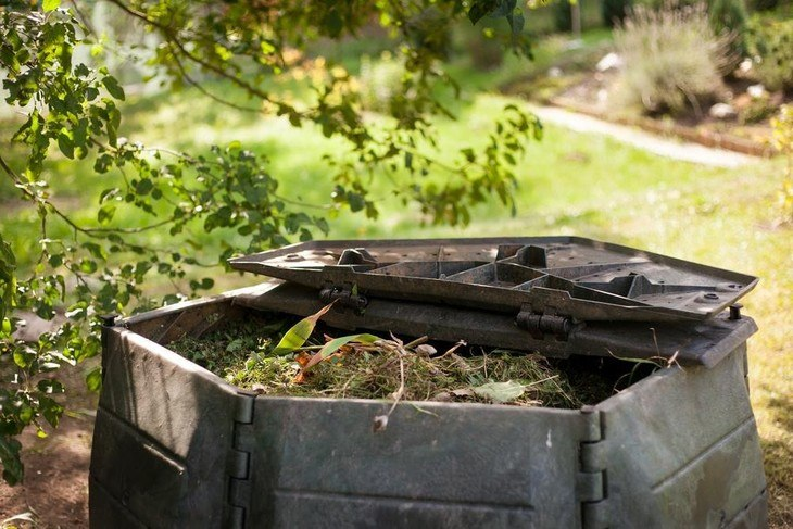 Freshly cut leaves can also be used to make organic compost