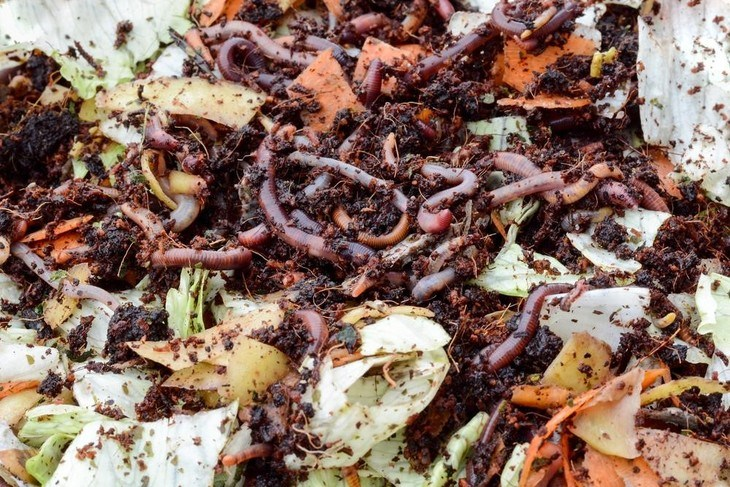 Kitchen scraps are an excellent material for composting