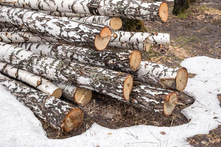 Logs, woods, and trees are some of the things you need to cut or prune