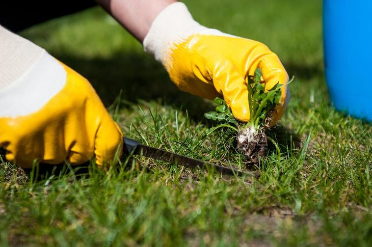 Removing weeds by hand can be extremely tedious, which is why gardeners opt for herbicides instead