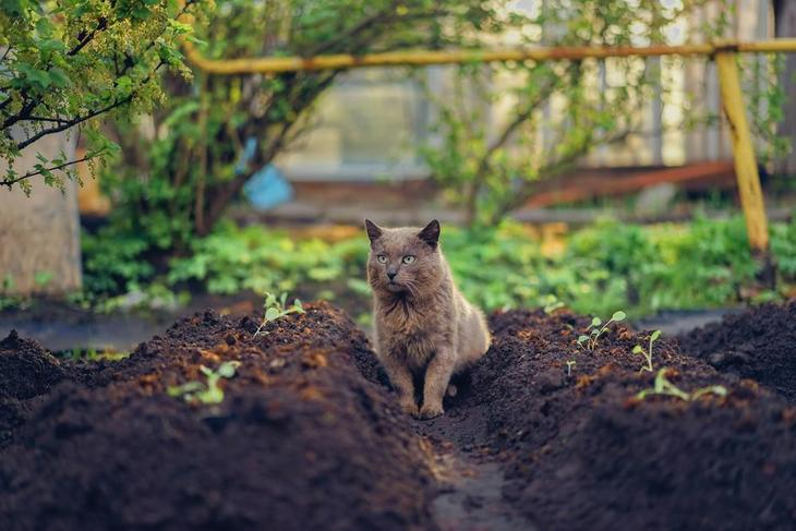 Some cats may dig a hole in your garden beds
