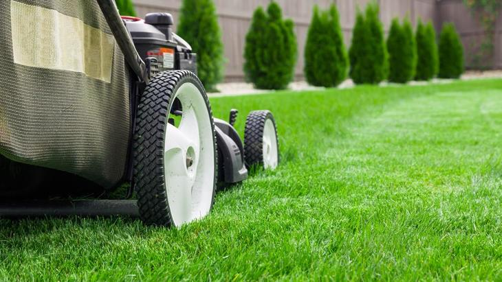 Wait for several days to mow your lawn after spraying herbicide