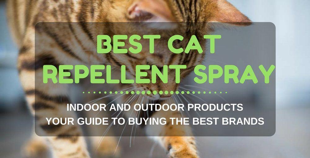 best cat repellent spray indoor and outdoor 1