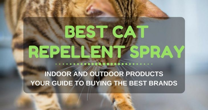 best cat repellent spray indoor and outdoor 1