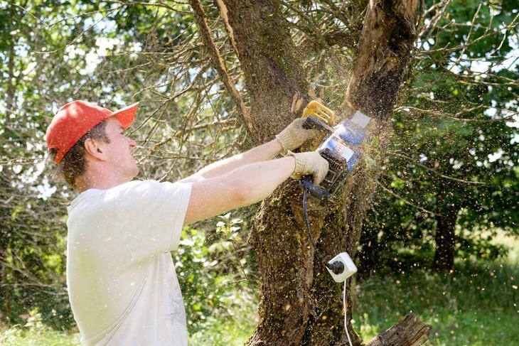 A regular homeowner is pruning his tree with an electric chainsaw