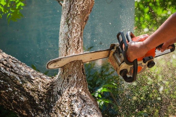 An arborist prunes his tree to prepare for big storms