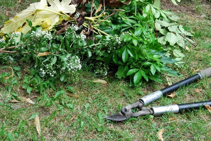 Anvil loppers are great in removing unhealthy branches and leaves