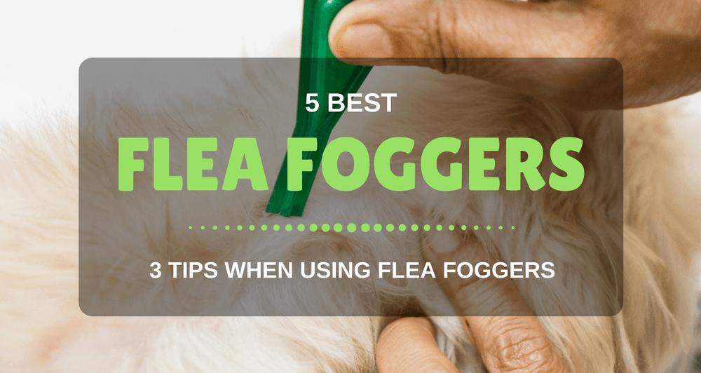 Best Flea Fogger for Home