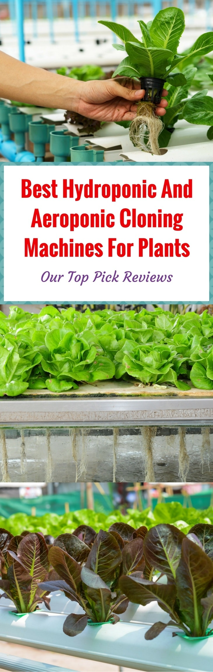 Best Hydroponic and Aeroponic pin itBest Hydroponic and Aeroponic pin it
