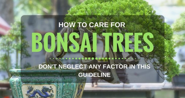 How To Care For Bonsai Trees – Don't Neglect Any Factor In This Guideline