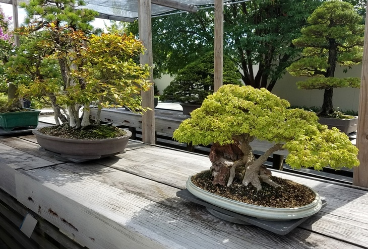Bonsai trees need a lot of light