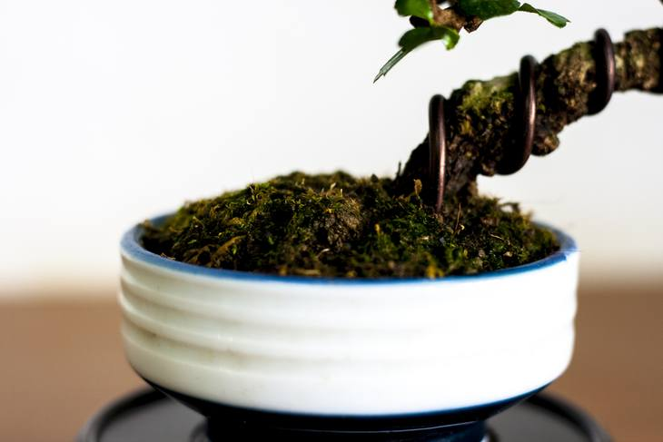 Bonsai trees need to have constant humidity