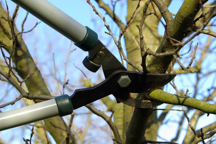 Bypass loppers are used to make clean tree pruning cuts