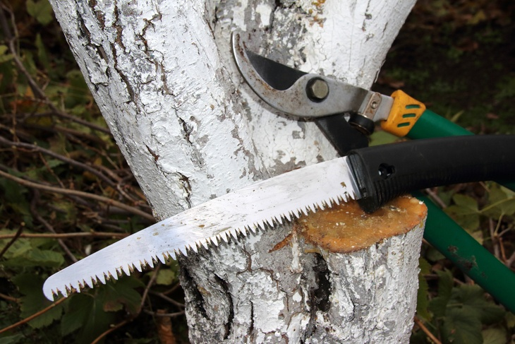 Knowing your plants helps you decide which pruning tools to use