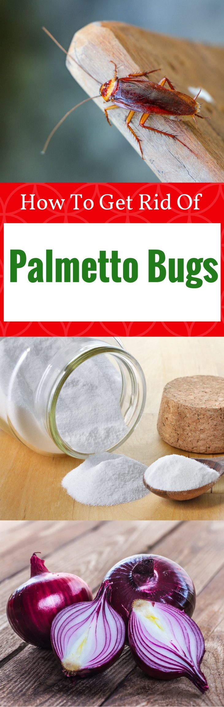 PALMETTO BUGS pin it