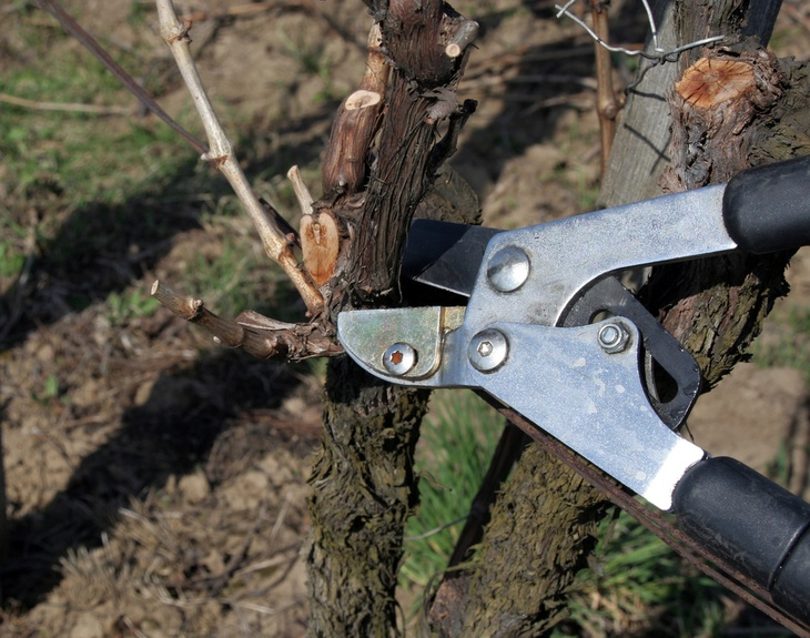 Timely pruning of plants ensures plant health and better growth