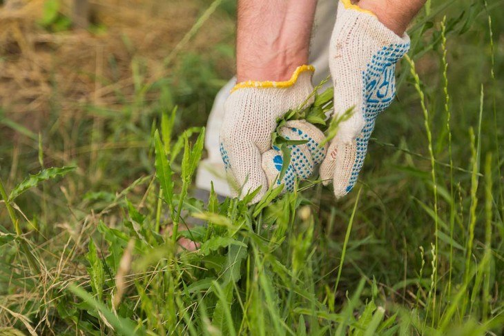 Weed eaters lessen the hassle of weeding your garden manually