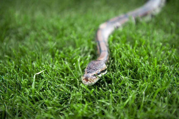 All kinds of snakes, both venomous and non-venomous, can lurk in your yard unexpectedly
