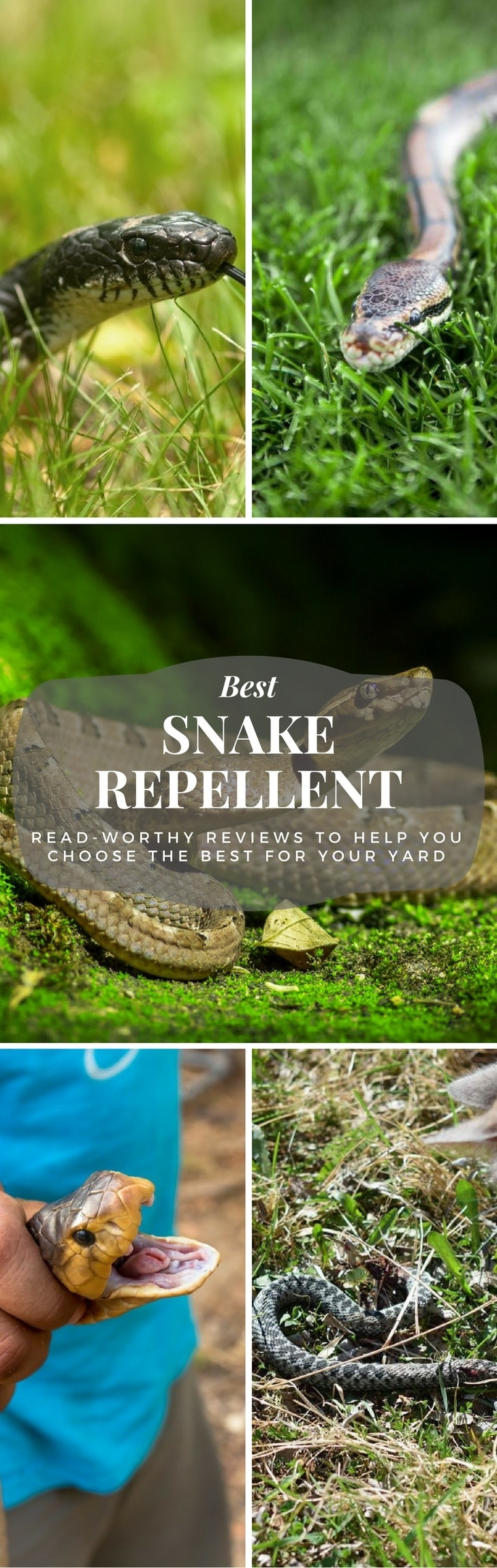Best Snake Repellent pin it