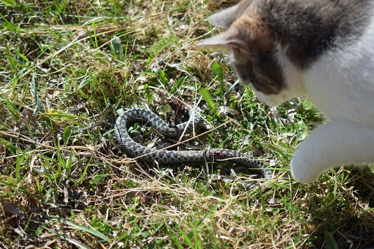 Cats are one of the few domestic pets that can hunt snakes on your yard