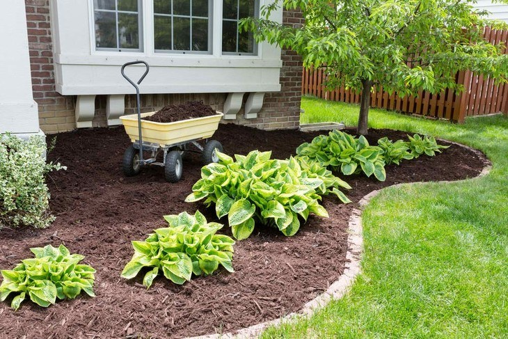 Putting mulch over the patch of your land in your garden is one of the ways to control weed growth in your yard