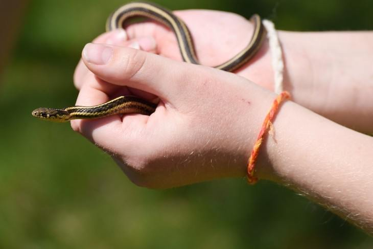 Snakes should be properly handled to reduce chances of injury
