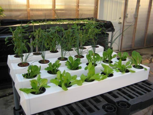 A common ebb and flow system setup, perfect for growing tomatoes, peppers, and lettuce