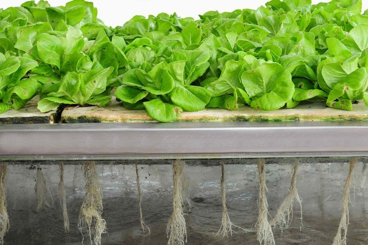 Aeroponics is also considered as another urban way of gardening