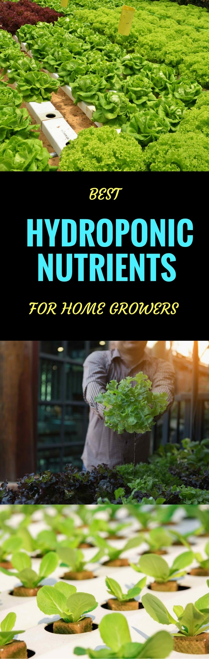 HYDROPONIC NUTRIENTS pin it