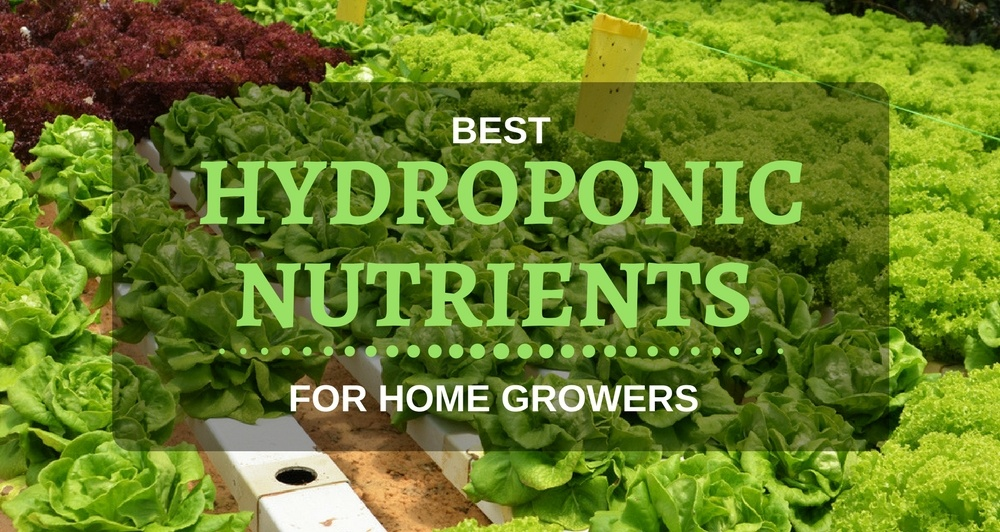 HYDROPONIC NUTRIENTS