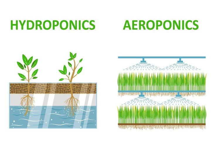 Hydroponics and aeroponics differ in the amount of water used in each system