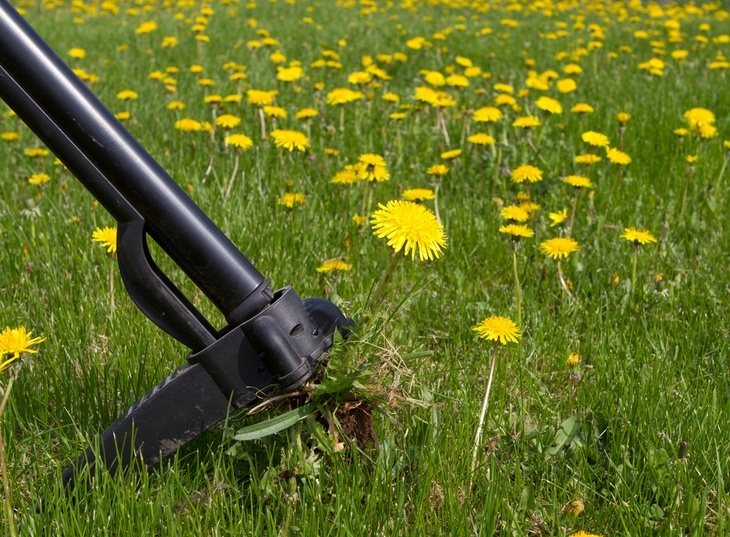 Killing Dandelions In Lawn Without Killing Grass