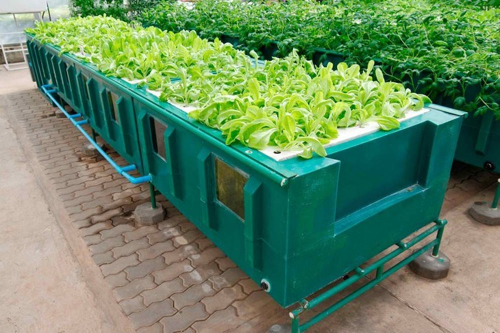Leafy vegetables, spices, and herbs are best grown in an LPA system