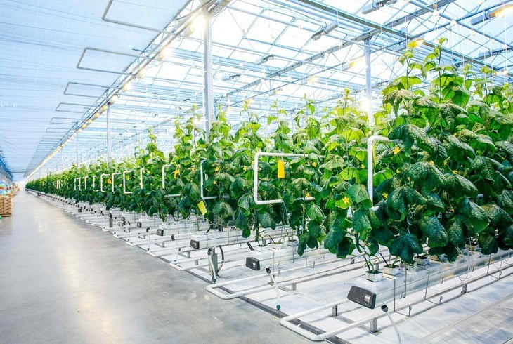 Maintaining the right temperature is ideal to create crops like these in a hydroponic environment