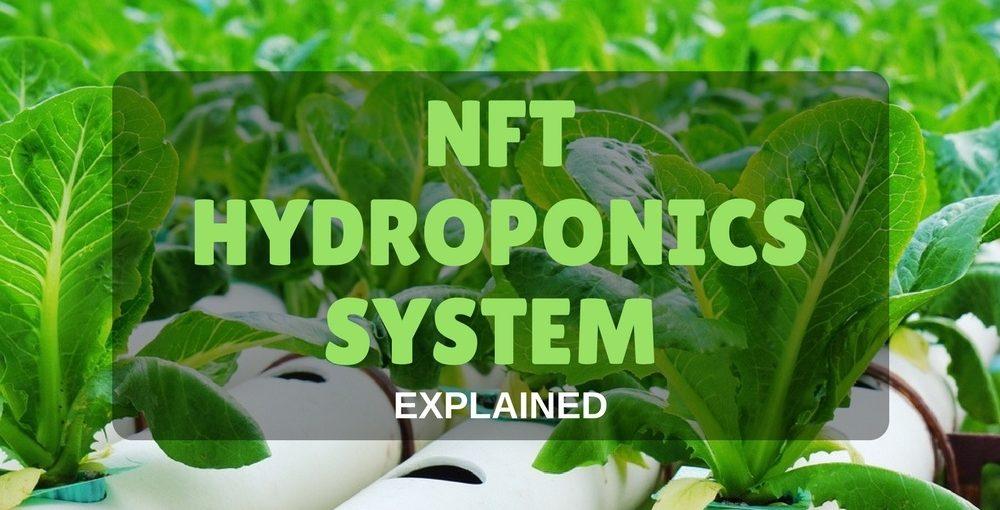 NFT Hydroponics System
