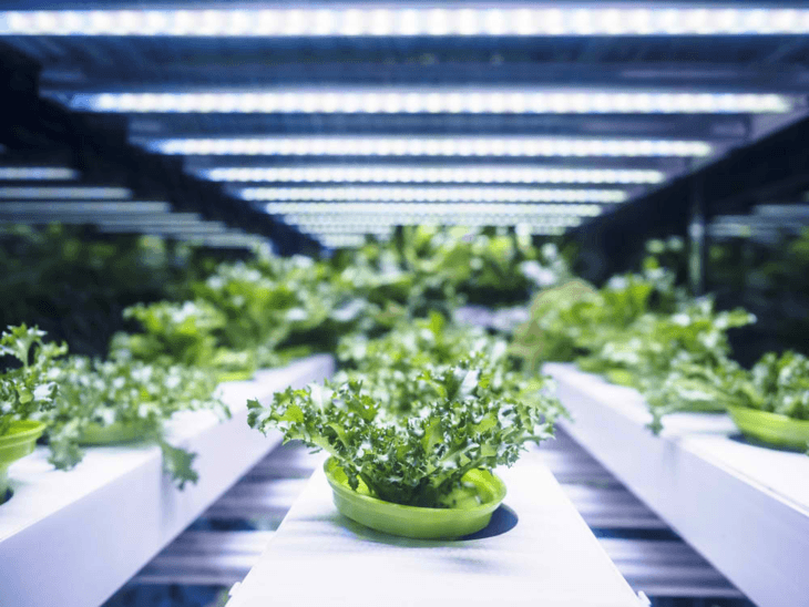 Plants grown under some grow lights can yield more produce if monitored correctly.