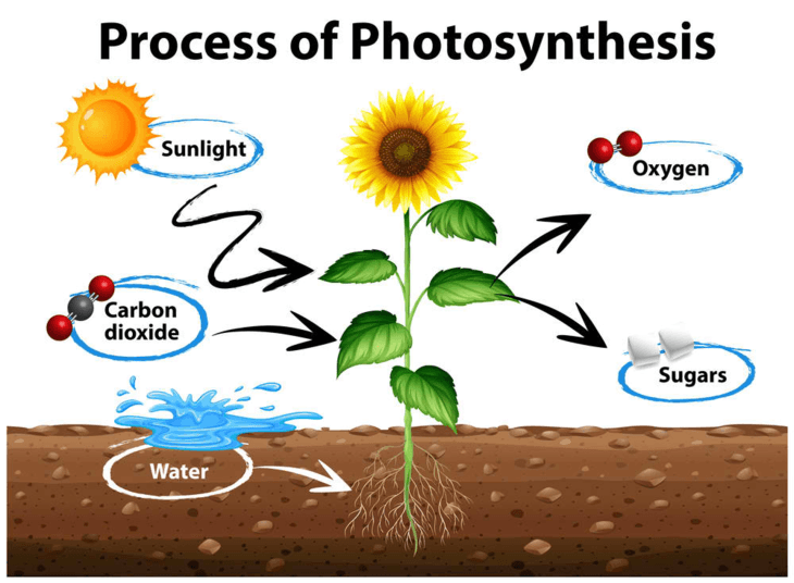 Plants need light, air, and water to successfully do photosynthesis.