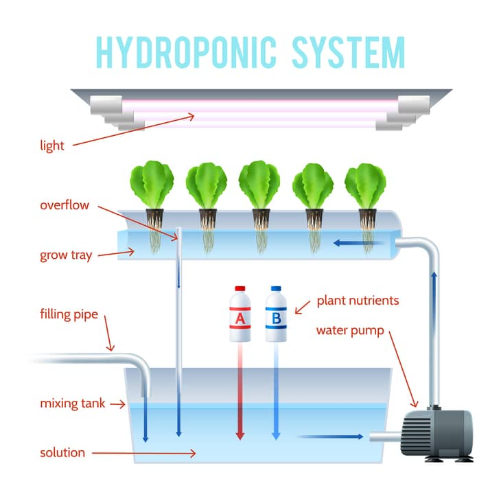 Setting up a large hydroponic system may be difficult, especially for beginners