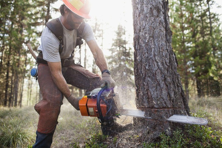 The bigger the tree to cut, the more powerful chainsaw is required to do the job