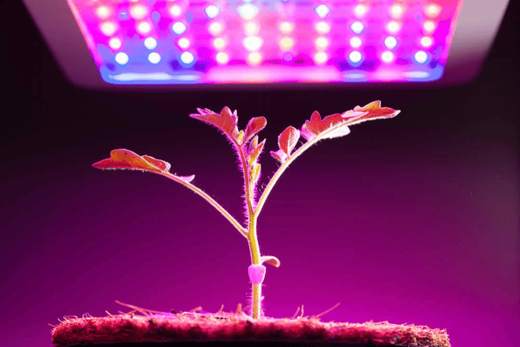 The function of a grow light replaces the function of the sun.