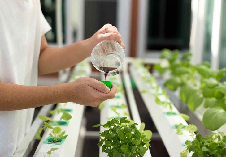 The liquid solution is applied to plants in a hydroponic environment to encourage growth