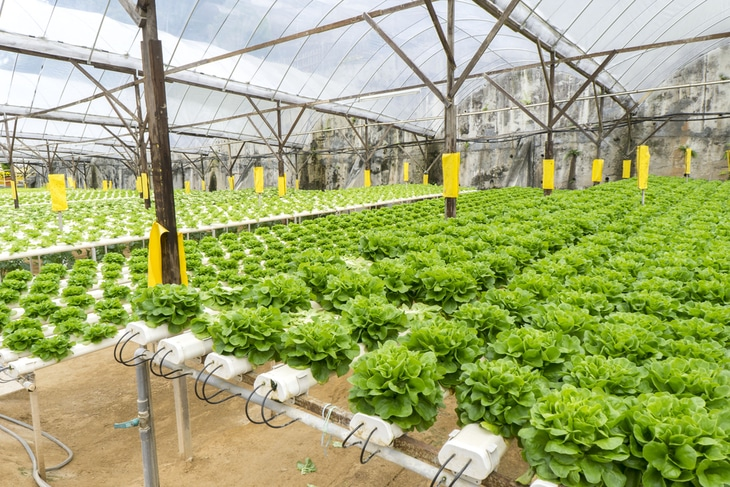 Using hydroponic system is a way of helping the environment since it reduces waste and pollution that soil runoff brings