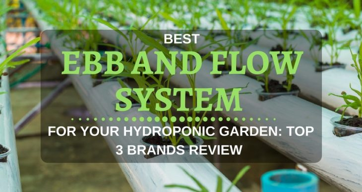 best ebb and flow system