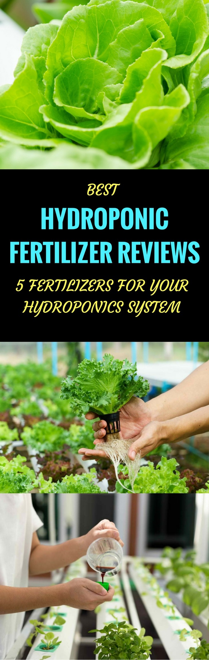 best hydroponic fertilizer pin it