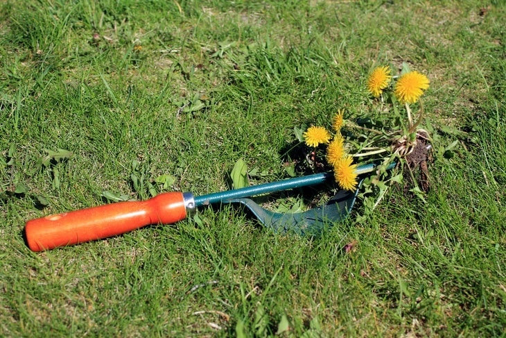 How to Kill Dandelions without Killing Grass