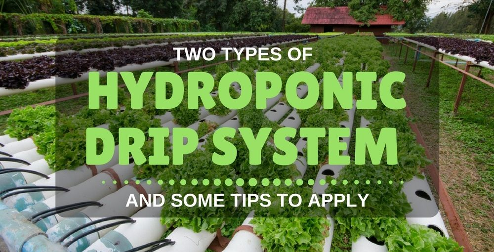 hydroponic drip systems