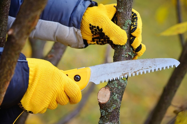 Bushcraft saw is a useful tool when pruning trees in Autumn
